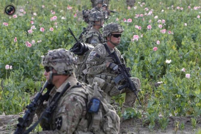 Производство наркотиков в Афганистане неуклонно растет